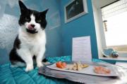 В Великобритании открылся отель класса люкс для котов