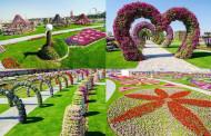 В Дубае открылся цветочный сад