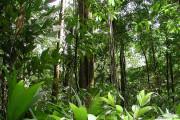 Бразилия планирует привлечь экотуристов в джунгли